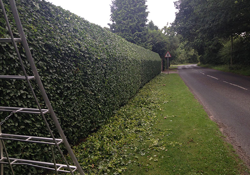 Commercial grounds tree trimming