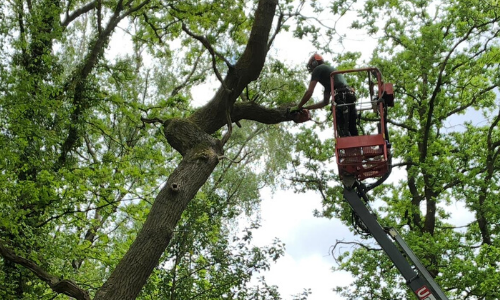 Tree Surgeon Knutsford
