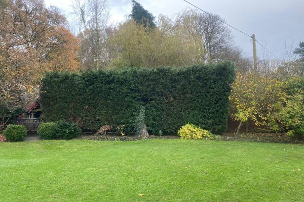 Hedge Reduction in Byley