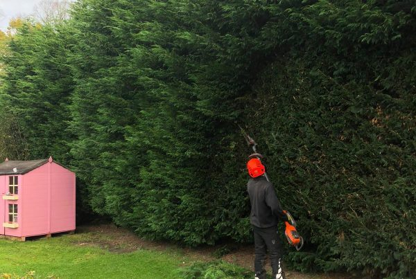 Tree Surgeon in Byley