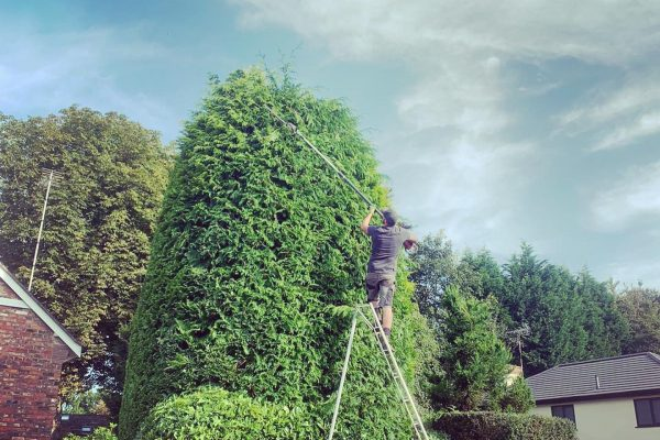 Hedge Maintenance Macclesfield