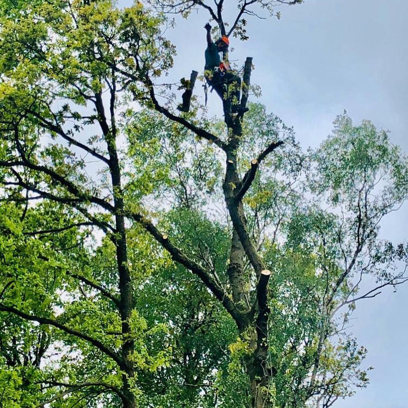 Tree Surgeon in Knutsford
