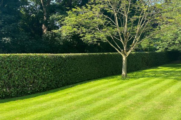 Garden Maintenance in Knutsford