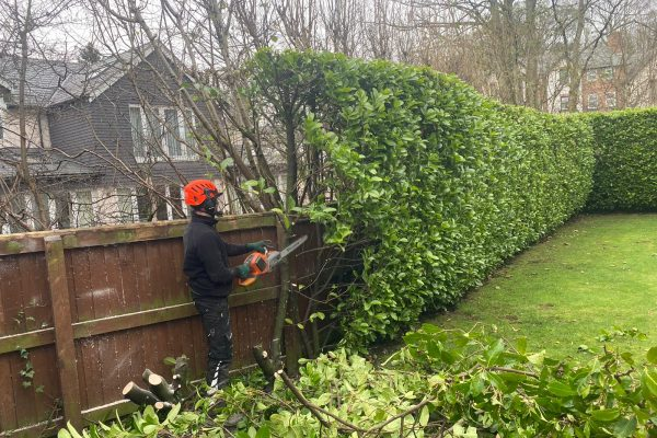 Hedge Removal in Knutsford