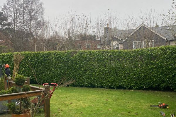 Hedge Removal in Cheshire