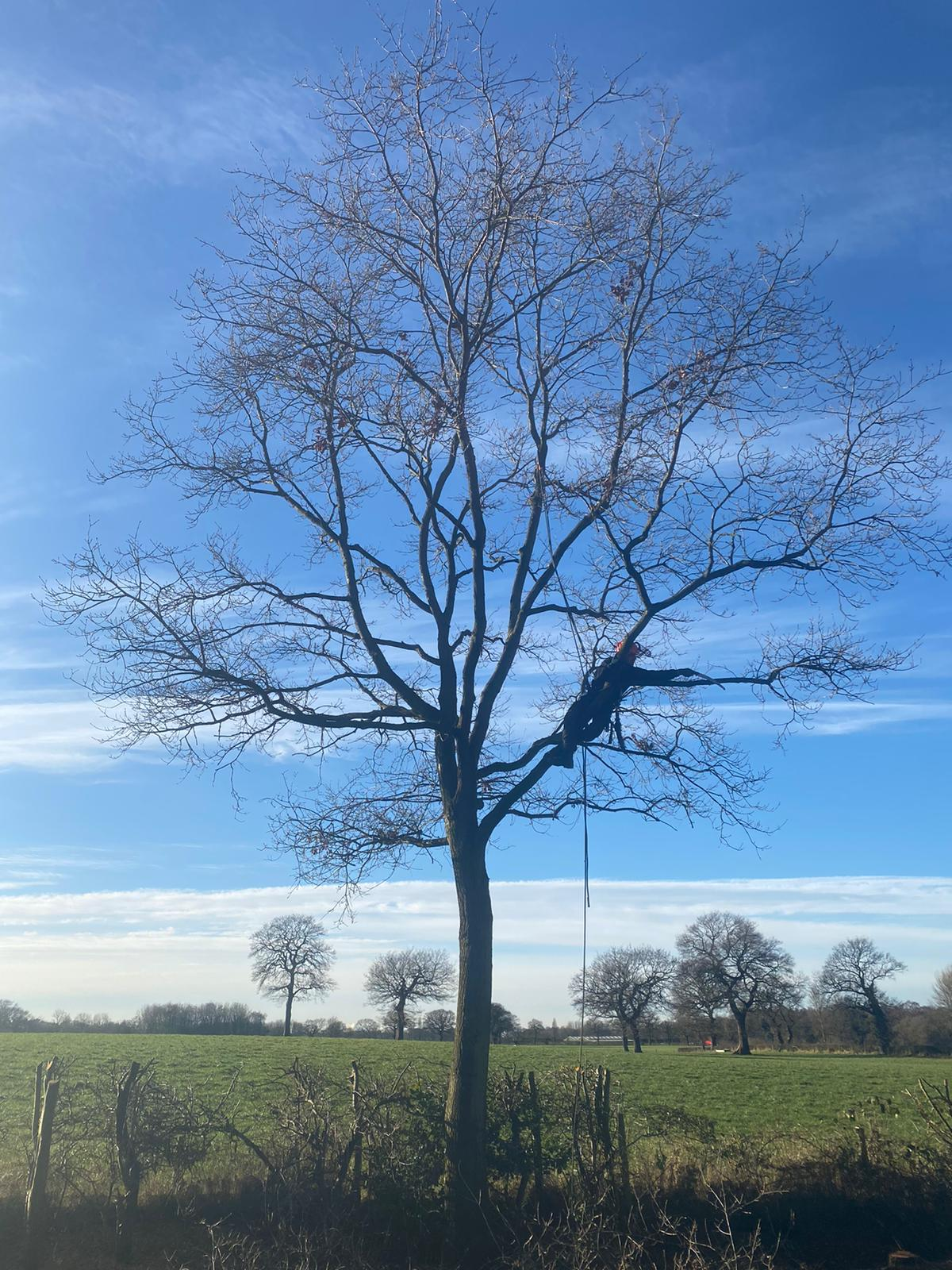 Tree Services Knutsford