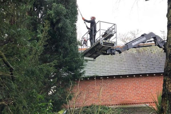 Tree Services in Plumley