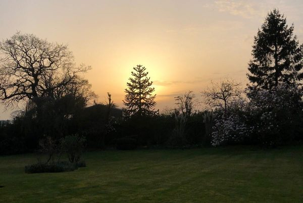 Lawn Maintenance in Cheshire